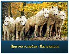 Притча о дружбе - Стая волков и три охотника