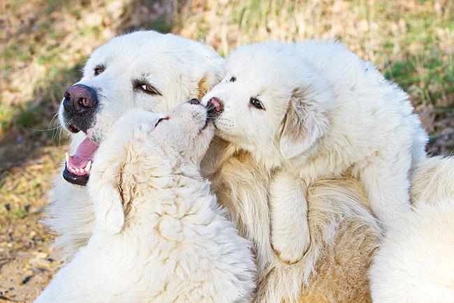 15 замечательных фотографий целующихся животных