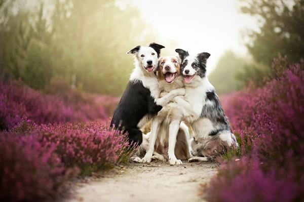 20 шикарных портретов собак