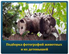 Подборка фотографий животных и их детенышей