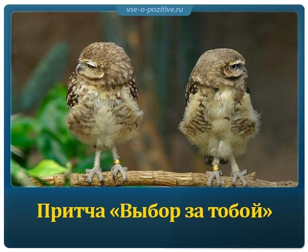 Притча «Выбор за тобой»